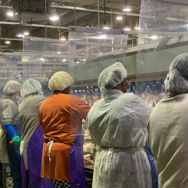 Meatpacking plants have long relied on immigrant labor. Some now turn to foreign visa workers