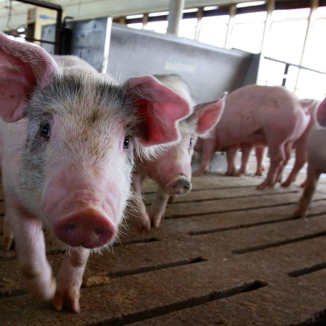 Missouri eases rules for building CAFOs despite outcry about potential pollution